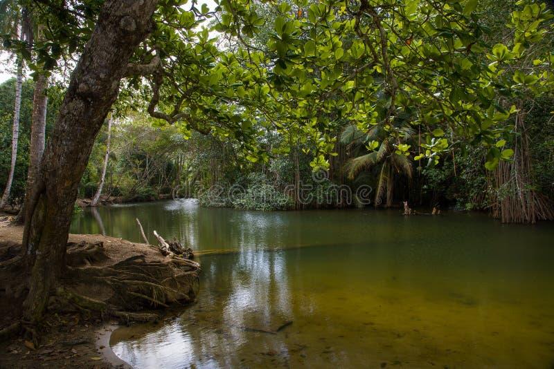 La boca de un pequeño río en Costa Rica fotos de archivo libres de regalías