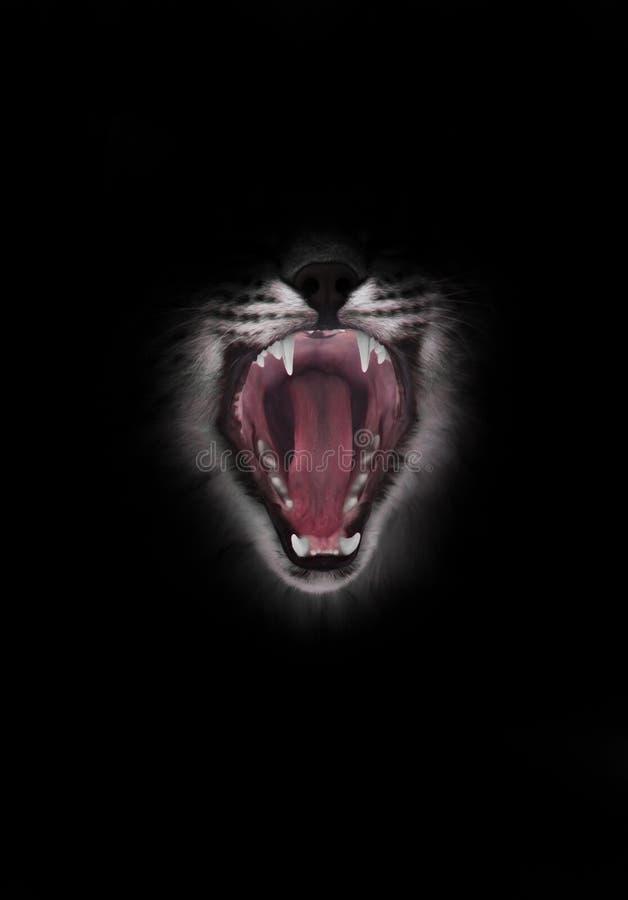 La boca roja depredadora del gato abierto de par en par hambriento y voraz en un fondo negro imagen de archivo libre de regalías