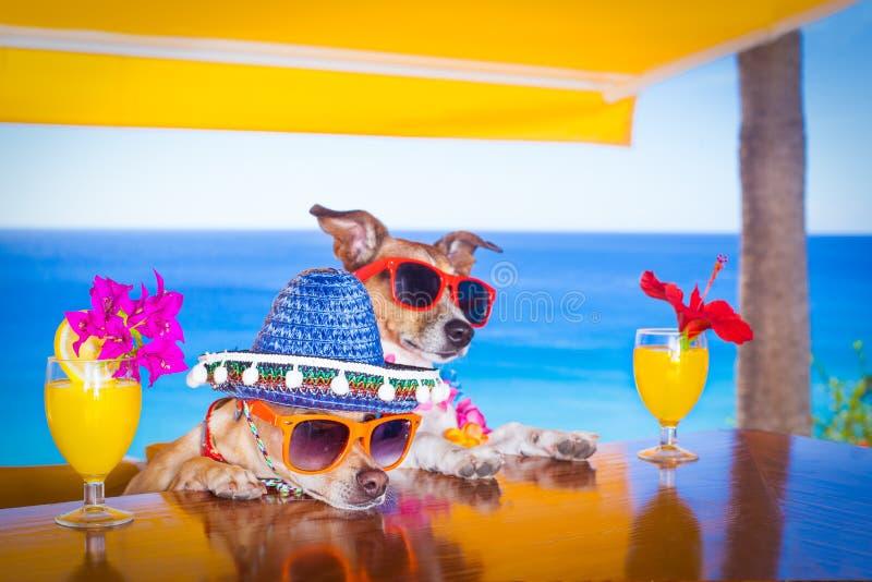 La boisson de cocktail poursuit les vacances AR de vacances d'été la barre image libre de droits