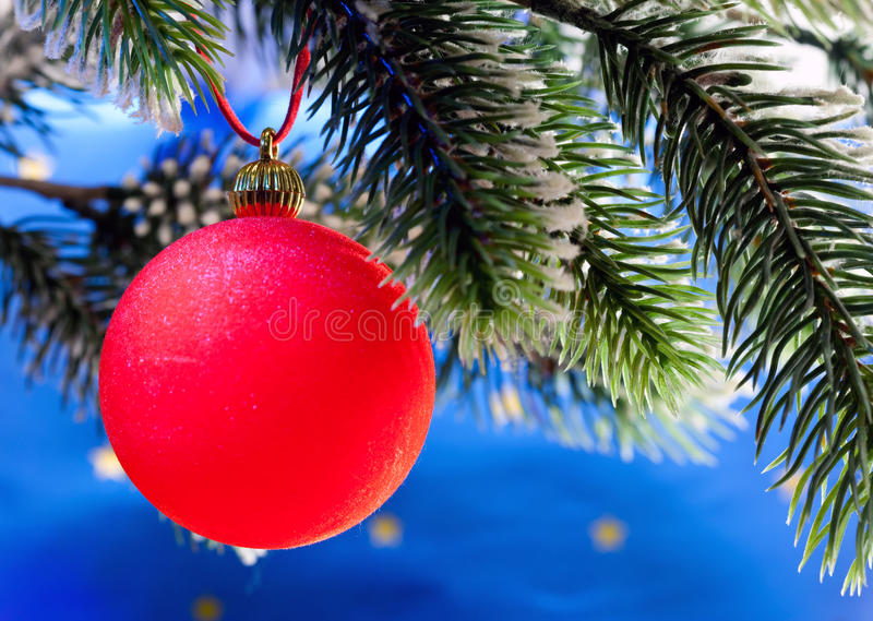 La bola roja del Año Nuevo en una rama de un árbol de navidad. Todavía de la Navidad vida foto de archivo libre de regalías