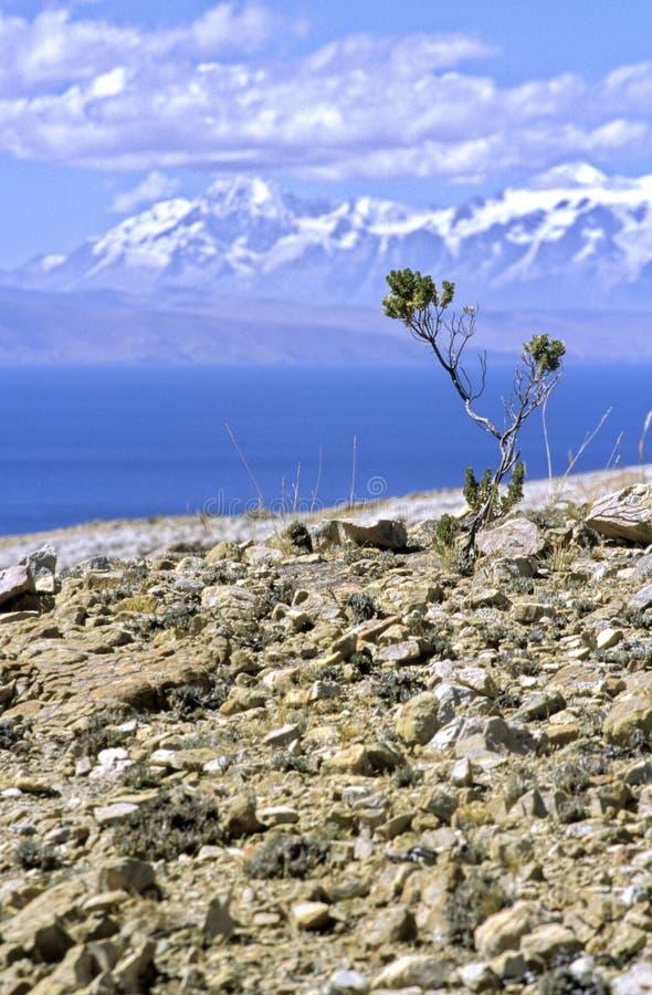 la Bolivie del isla sol photo libre de droits