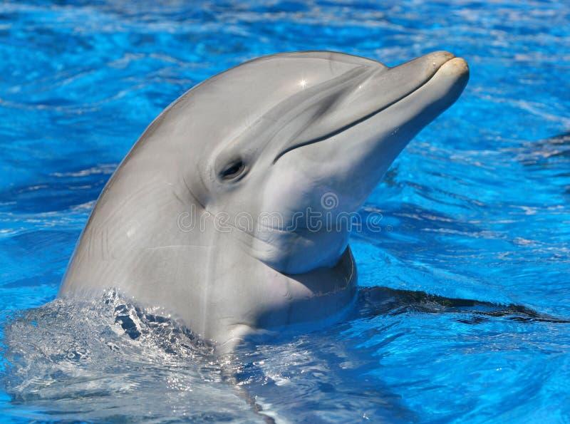 La botella olfateó el delfín