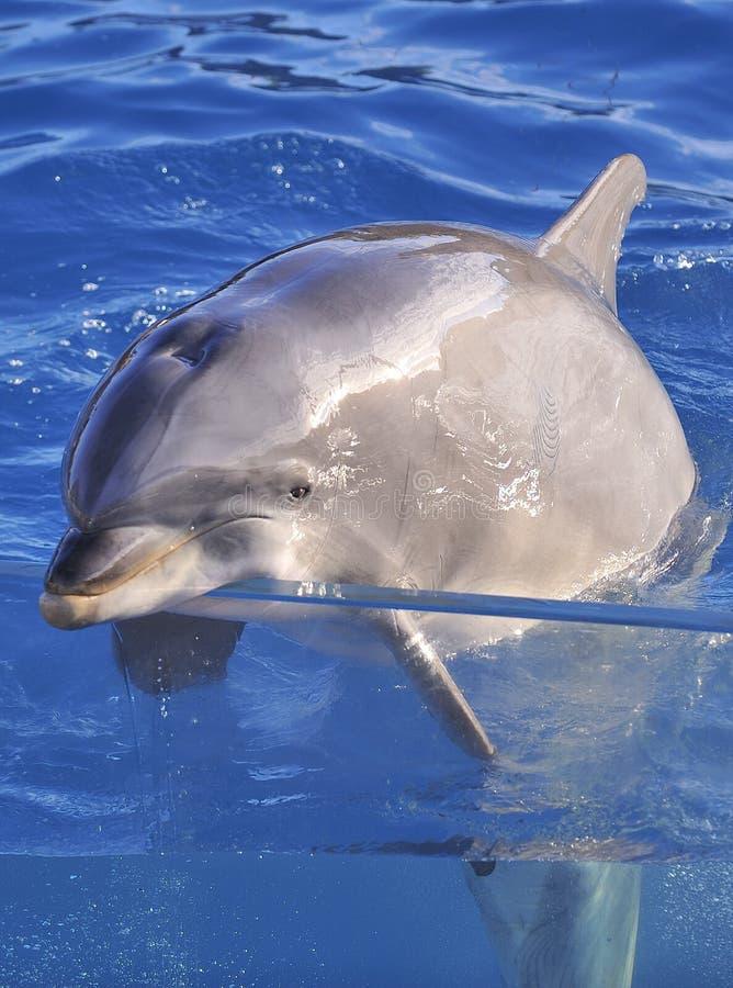 La botella olfateó el delfín imágenes de archivo libres de regalías