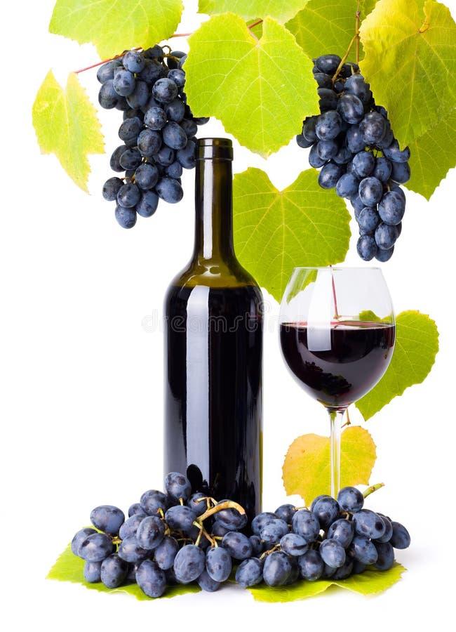 La botella y el vidrio de la uva de la pizca del vino rojo se agrupa fotografía de archivo libre de regalías