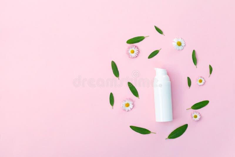 La bottiglia di crema con i fiori freschi della camomilla e le foglie di erbe verdi isolati su fondo rosa pastello, stronca la di immagini stock libere da diritti