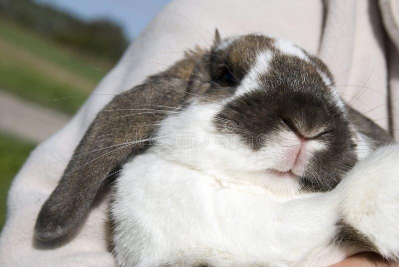 La bouche du lapin photo stock