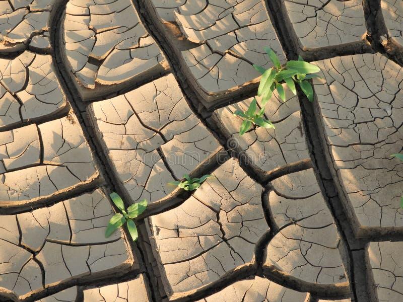 La boue criquée de la rivière du Limpopo images stock
