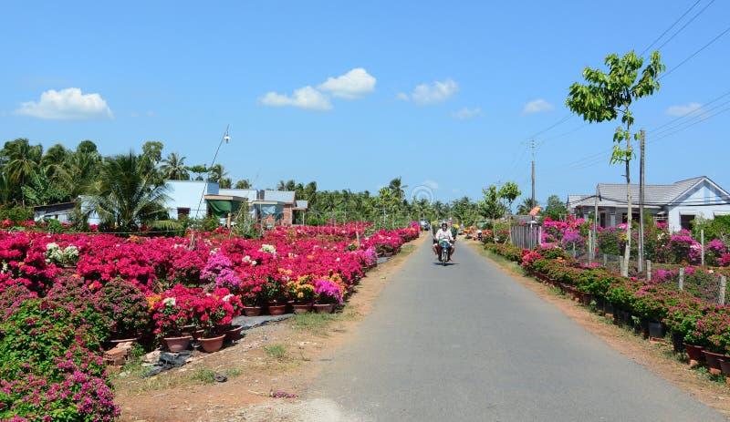 La bouganvillée fleurit sur la route rurale dans le delta du Mékong, Vietnam image stock