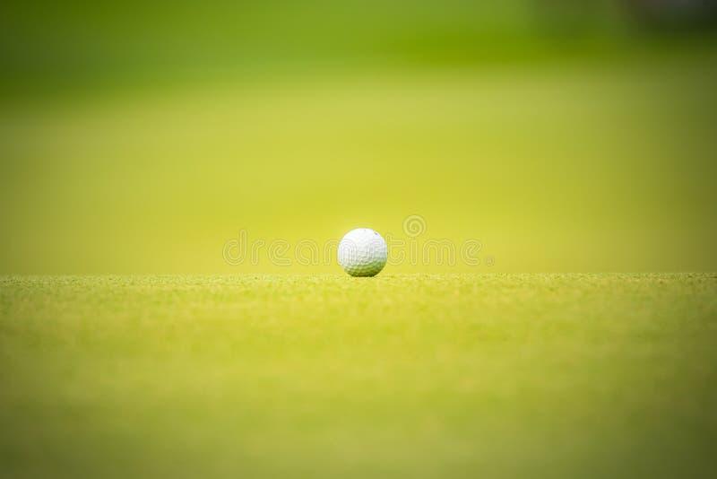 La boule de golf a mis dessus l'herbe verte du terrain de golf photos libres de droits