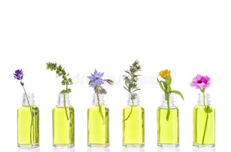 La bouteille d'huile essentielle avec des herbes et des fleurs a installé sur le fond blanc photographie stock