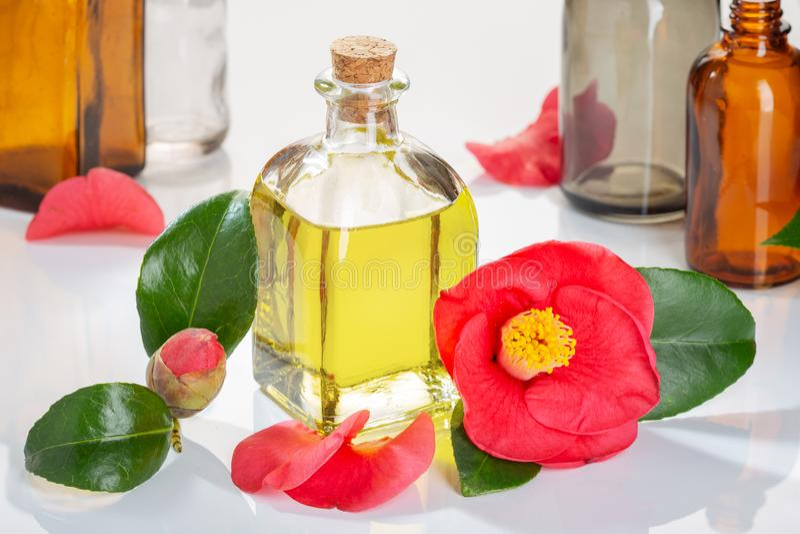 La bouteille en verre d'huile de camélia avec le cognassier du Japon de camélia fleurissent photos stock