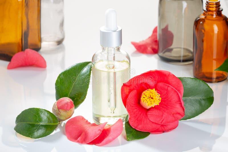 La bouteille en verre d'huile de camélia avec le cognassier du Japon de camélia fleurissent images libres de droits