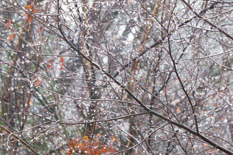La branche d'arbre avec de l'eau congelé chute après pluie verglaçante photo stock