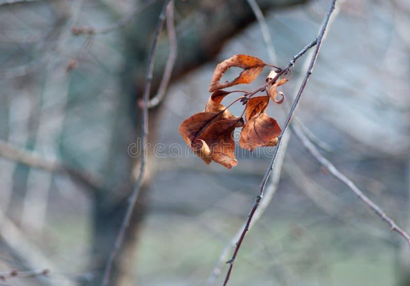 La branche de décembre photographie stock