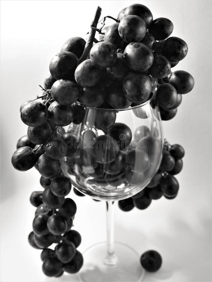La branche des raisins rouges dans le monochrome noir et blanc dans l'éclairage de studio pendant des verres de vin en verre photos libres de droits