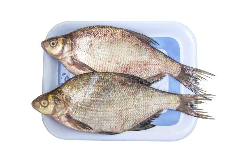 La brema de los pescados crudos foto de archivo
