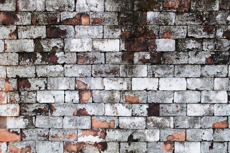 La brique rouge grunge de mur peignent le fond blanc de couleur Brique rouge sale, de la poussière de vieux mur, texture de conte photo libre de droits