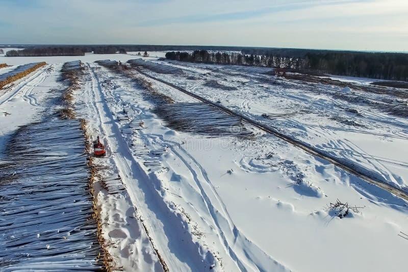 La bugia abbattuta degli alberi sotto il cielo aperto Disboscamento in Russia Distruzione delle foreste in Siberia Raccolta del l fotografia stock