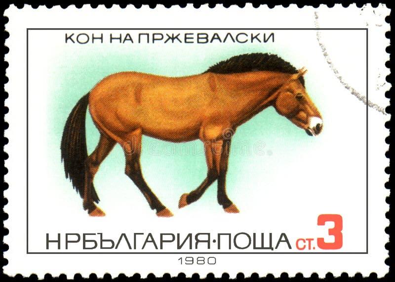 LA BULGARIE - VERS 1980 : un timbre, imprimé en Bulgarie, montre un cheval du ` s de Przewalski illustration libre de droits