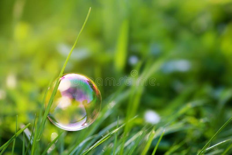 La burbuja de jabón colorida cuelga en la cuchilla de la hierba foto de archivo