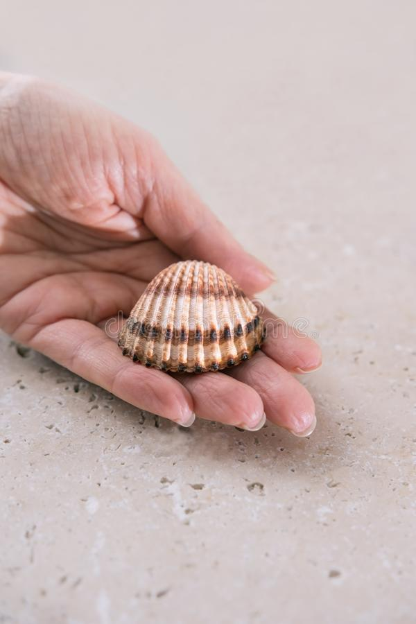 La cáscara del mar en la palma de la mujer imagen de archivo