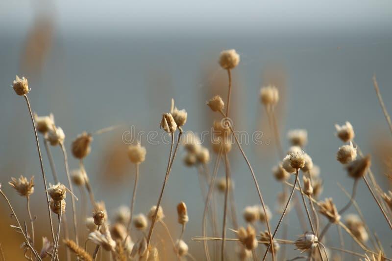La côte d'été de l'Ukraine avec des wildflowers près de Mykolaiv fond de papier peint de nature photos stock