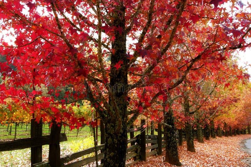 La caída colorea el condado del vino de Sonoma foto de archivo