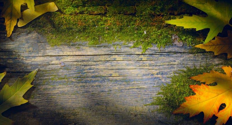 La caída del otoño deja el fondo; hoja amarilla en el fondo de madera imágenes de archivo libres de regalías