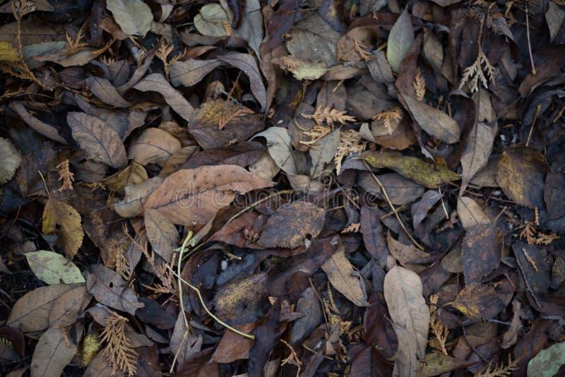 La caída secada se va en el bosque molido en otoño fotografía de archivo libre de regalías