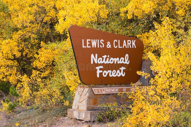 La caída viene trayendo las hojas amarillas a Lewis y a Clark National Forest fotos de archivo