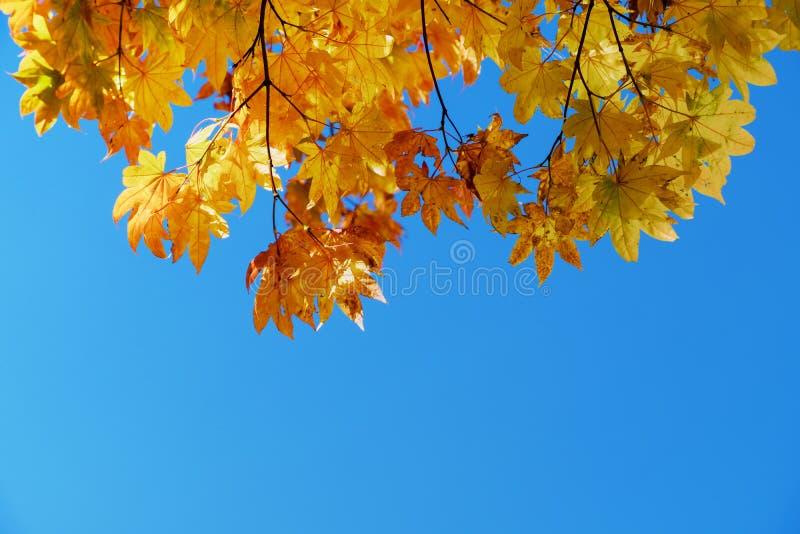 La caída y Autumn Season Concept, mirada sobre el cielo tiraron fotos de archivo libres de regalías