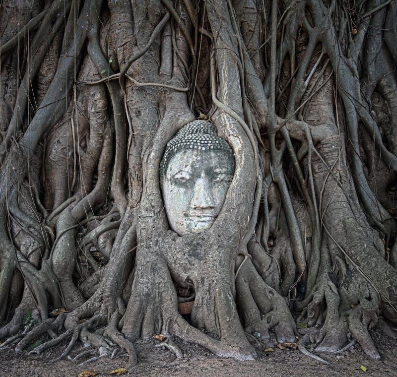 La cabeza de Buda en árbol arraiga en Wat Mahathat, Ayutthaya, Tailandia fotografía de archivo libre de regalías