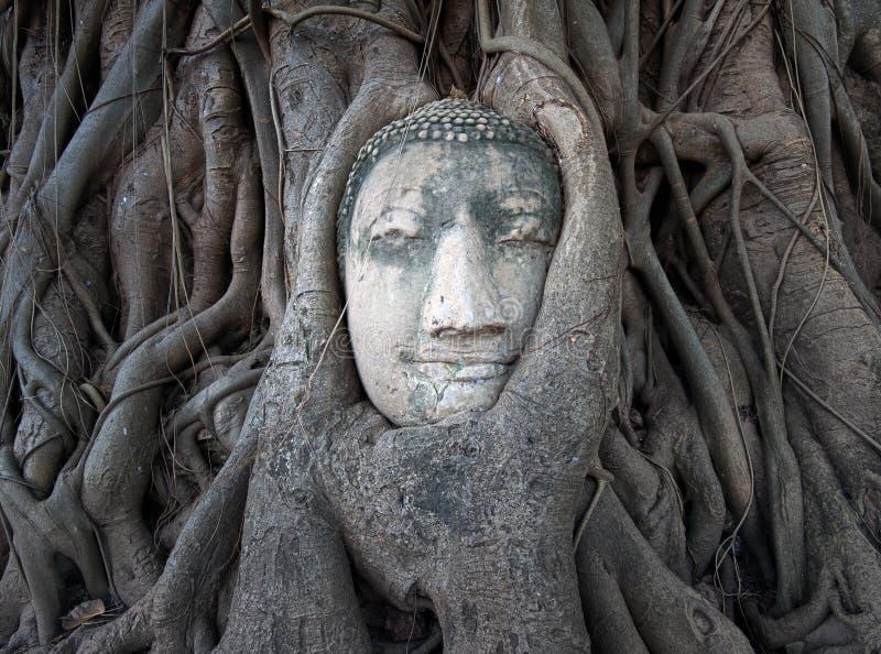 La cabeza de Buda en árbol arraiga en Wat Mahathat, Ayutthaya, Tailandia fotos de archivo libres de regalías