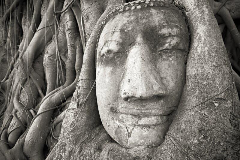 La cabeza de Buda en árbol arraiga en Wat Mahathat, Ayutthaya, Tailandia imagenes de archivo