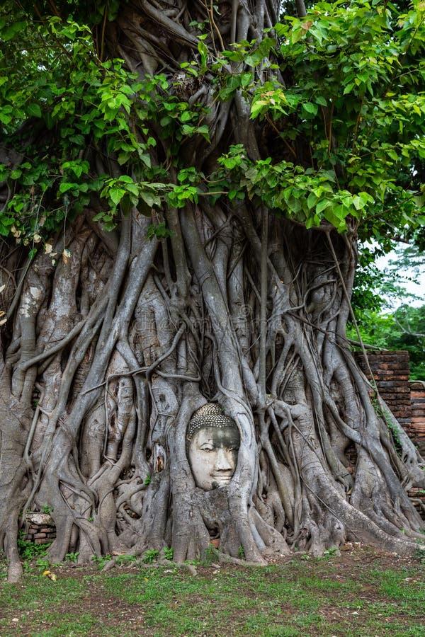 La cabeza de Buda entrelazó con las raíces del árbol, Wat Mahathat, prov de Ayutthaya fotos de archivo