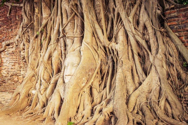 la cabeza de Buda popular en árbol imagen de archivo libre de regalías