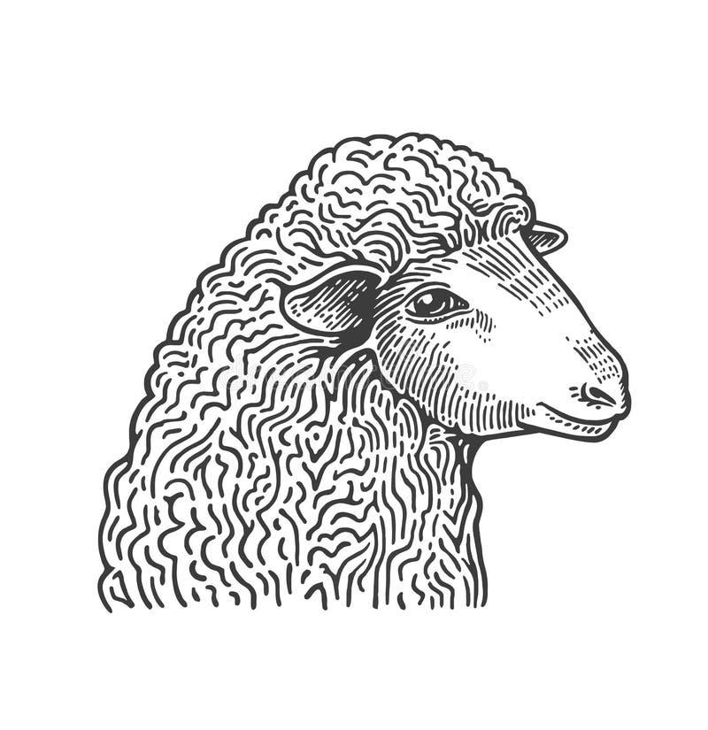 La cabeza de ovejas da exhausto en estilo del grabado medieval Animal del campo nacional aislado en el fondo blanco Vector libre illustration