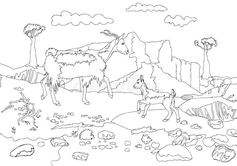 La Cabra Y La Cabra En Un Fondo De Montañas De La Isla De Socotra ...