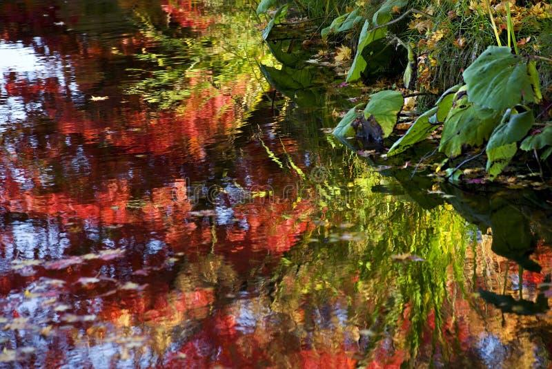 La caduta del Van Dusen Garden colora le riflessioni dell'acqua fotografia stock