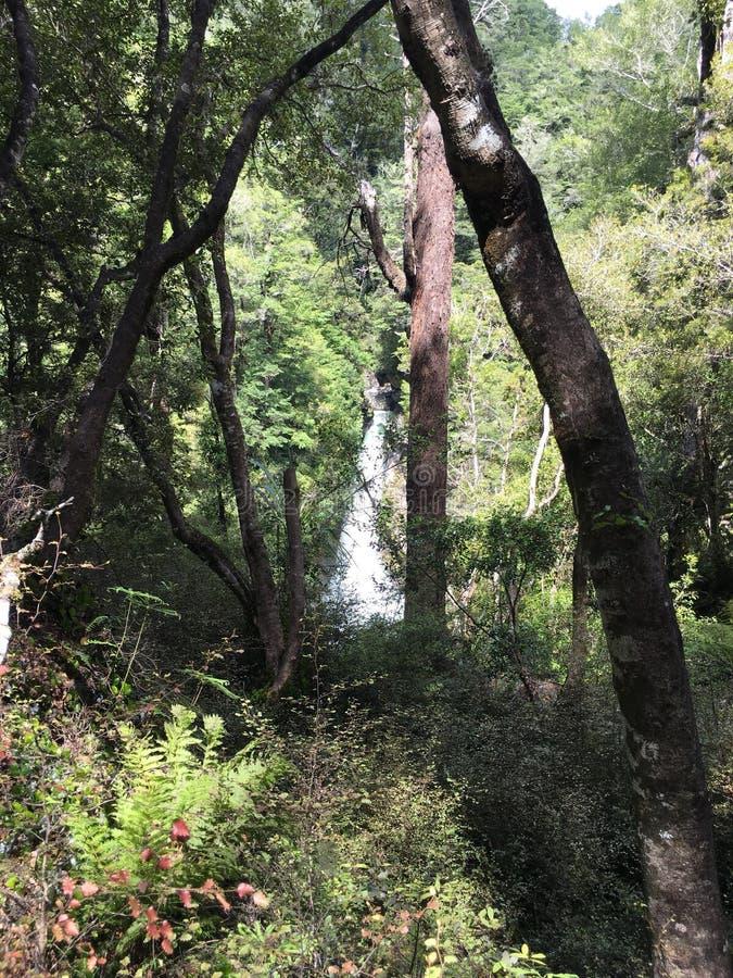 La caduta dell'acqua ha gettato gli alberi immagini stock libere da diritti