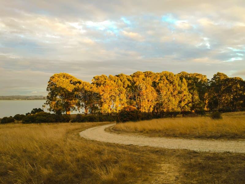 La caduta e l'autunno condiscono il fondo della natura con il percorso di camminata, oro immagine stock libera da diritti