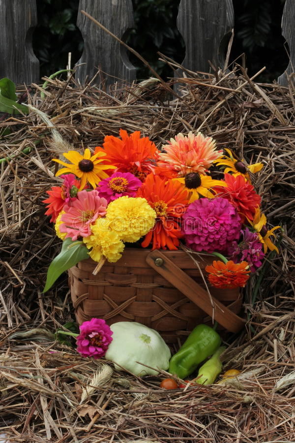 La caduta fiorisce in canestro tessuto con fieno e vecchio recinti i precedenti fotografia stock