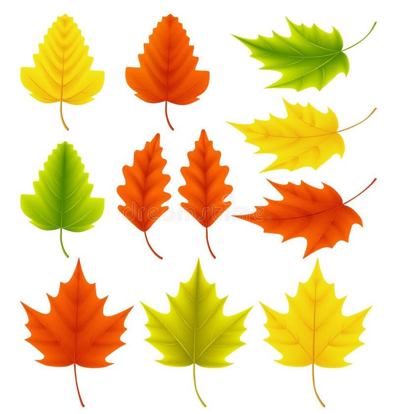 La caduta lascia la raccolta di vettore Insieme delle foglie di autunno come l'acero e la quercia illustrazione di stock