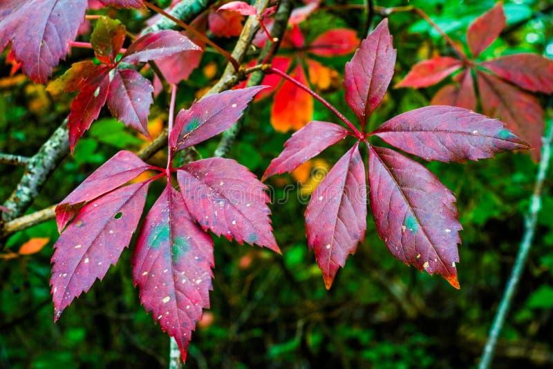 La caduta luminosa ha colorato le foglie immagini stock libere da diritti
