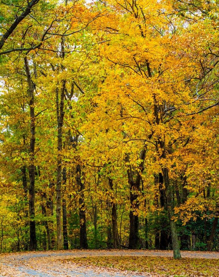 La caduta luminosa ha colorato le foglie su Ridge Parkway blu fotografia stock