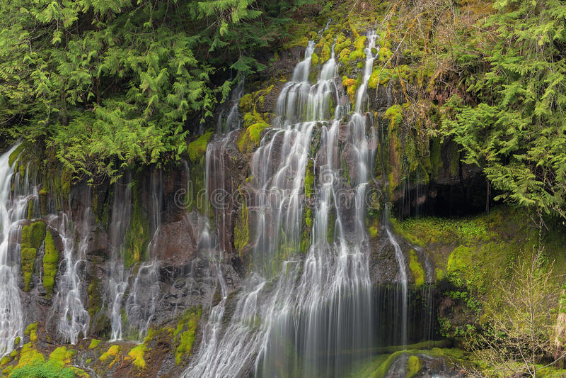 La cala de la pantera cae en Washington State foto de archivo