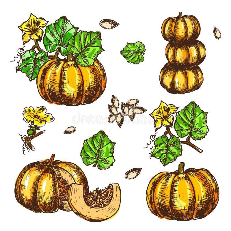 La calabaza determinada dibujada mano del bosquejo del vector se va, las flores y las semillas stock de ilustración