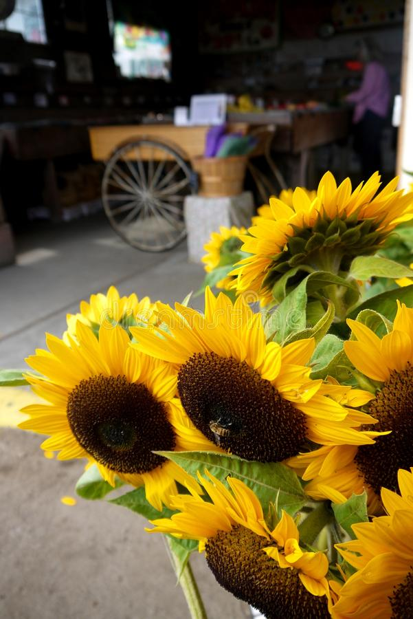 La Californie : tournesols de boutique de support de ferme images stock
