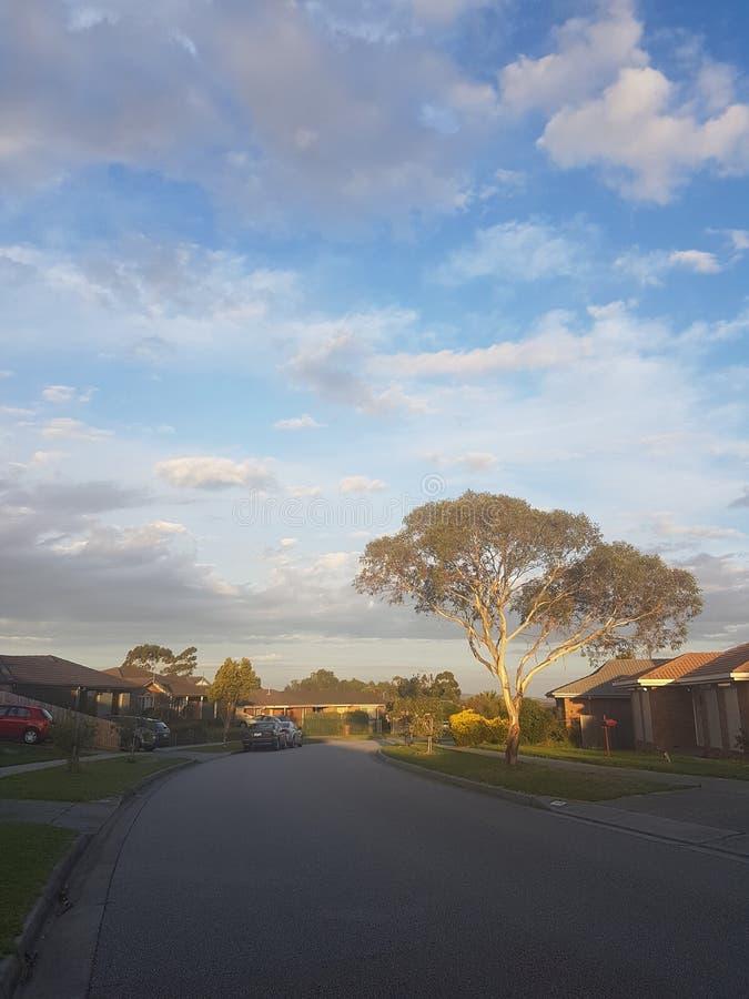 La calle The Sun la sombra el árbol la trayectoria el camino la tarde curruscante de la puesta del sol imagen de archivo