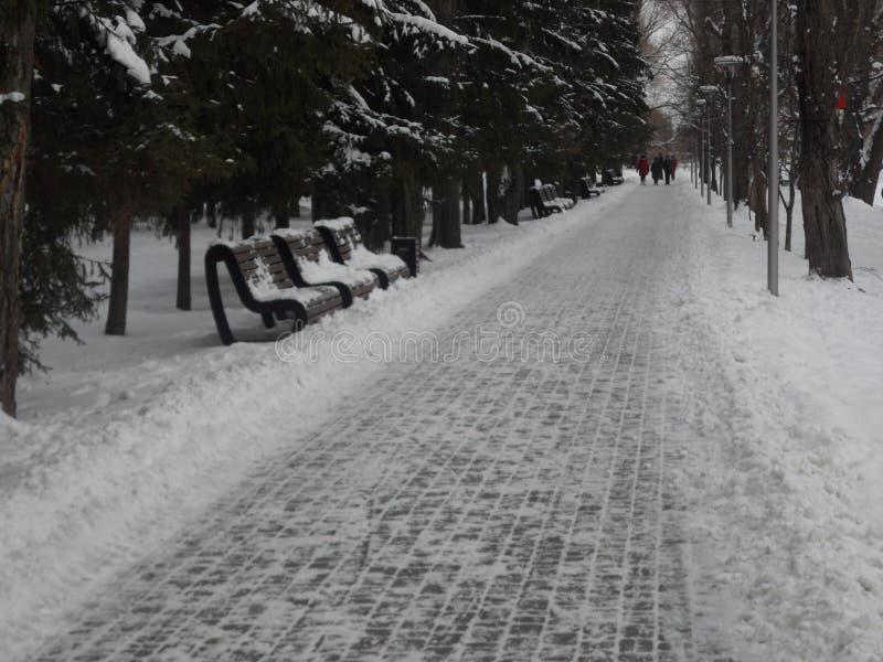 La calzada del ` s del parque por mañana del invierno fotografía de archivo libre de regalías